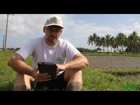 IRRI Agronomy Challenge - The Documentary