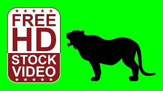 FREE HD video backgrounds - animal tiger silhouette howling eating and walking on green screen