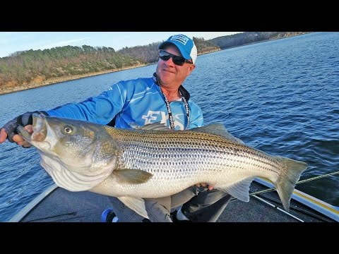 FOX Sports Outdoors SouthWEST #4 - 2017 Beaver Lake Arkansas Striper Fishing
