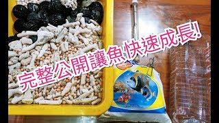 輕鬆養孔雀魚 (日常水族)簡易養小丑魚    讓孔雀魚飛速成長