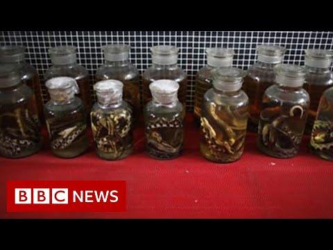 Covid-19: China's dilemma over wild meat trade - BBC News