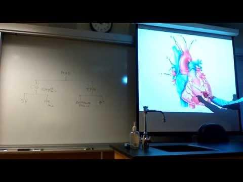 Dr Seigel's BIO Lab Review- blood, heart, veins & arteries CSM