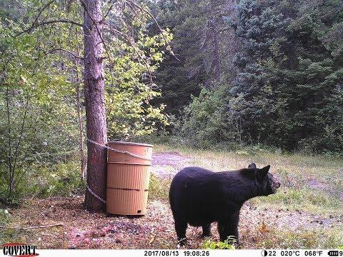 DIY BEAR HUNTING: Successful Ontario Bear Hunt