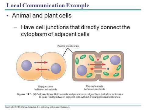 An Essay Towards A Practical English Grammar Describing Ap Bio Cell