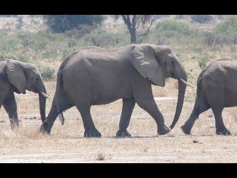 E5 - Trip to Ruaha national park, Tanzania