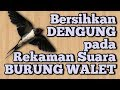 Membersihkan Bunyi Dengung Pada Rekaman Burung Walet  Mp3 - Mp4 Download