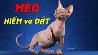 Top 10 Loài Mèo HIẾM và ĐẮT Nhất Thế Giới!!!