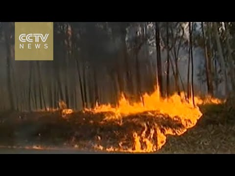 Over 3,000 firefighters battle massive wildfires in Portugal
