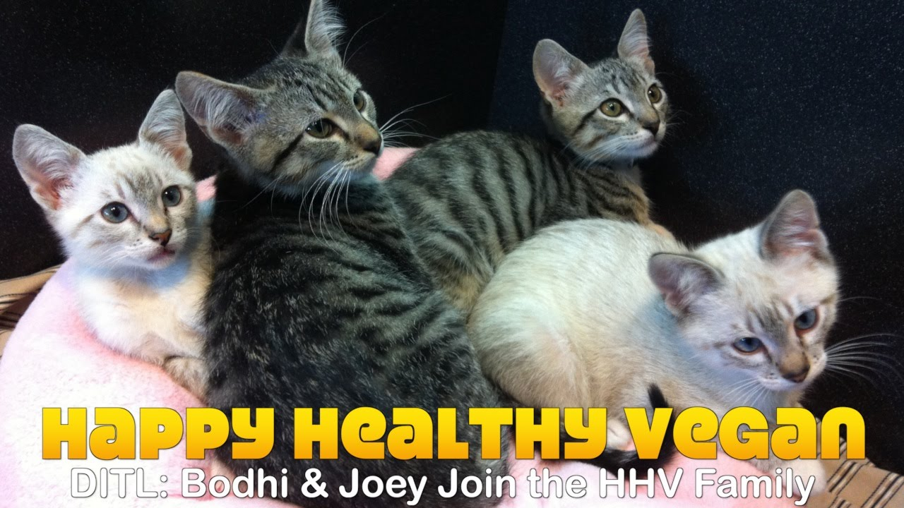 Flashback: Bodhi & Joey Join The Family (2012) #FBF