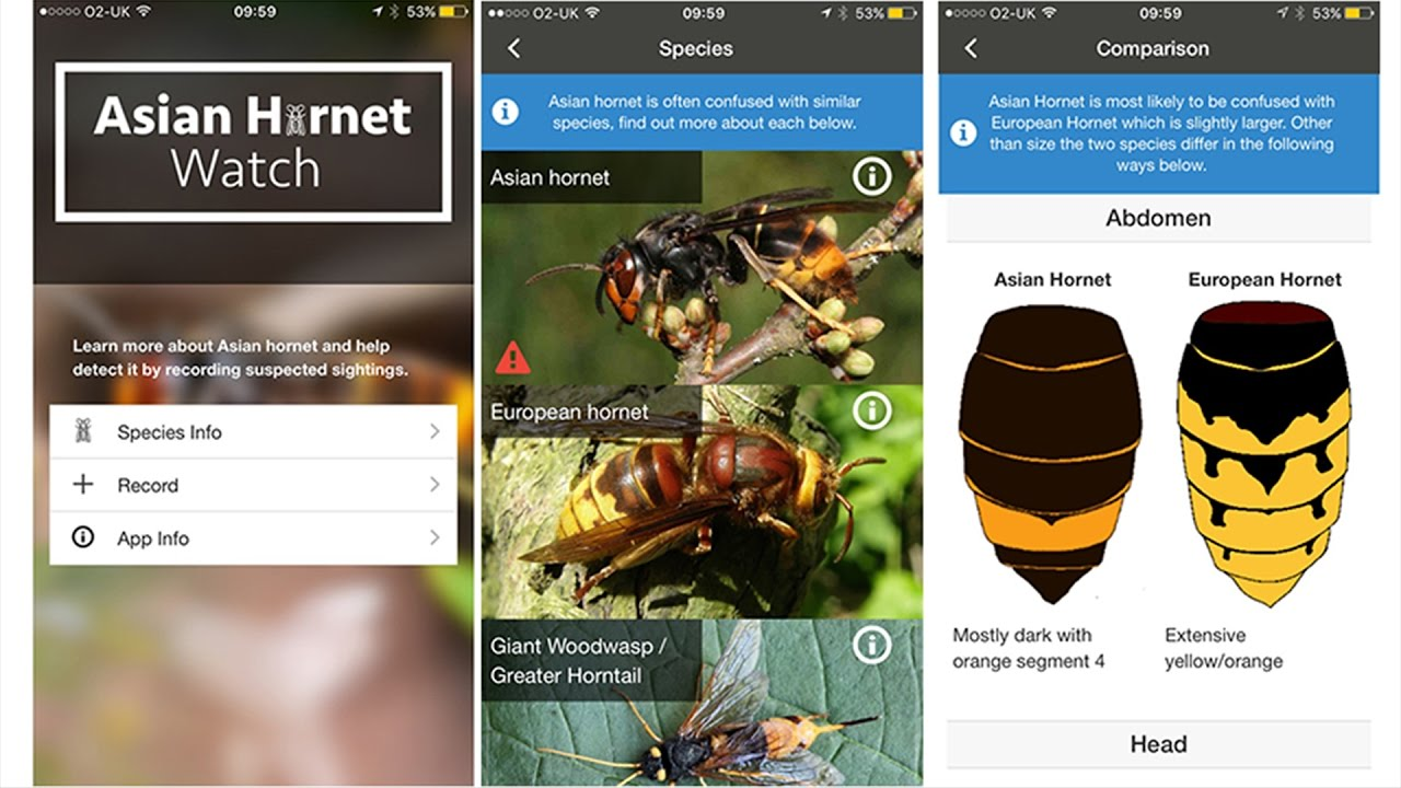 Asian Hornet Watch identification guide and recording app