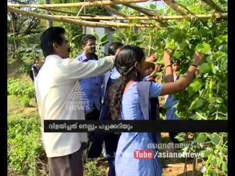Success story of students farming : Chuttuvattom News