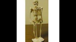 오렌지몰 [만들기재료]나무공작_인체뼈조립38cm