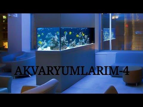 Akvaryumlarım-4 (Kasım 2016)