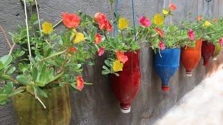 Làm chậu treo đầy màu sắc trồng hoa mười giờ, hoa sam tuyệt đẹp - Colorful bottles grow portulaca