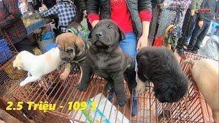 Chợ chó mèo cảnh rẻ đẹp | Hỏi giá từng loại chó mèo | Pets Market