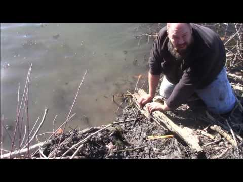 Beaver Trapping For Beginners Episode 2 | Trapping In Open Water