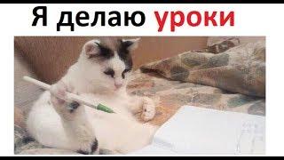 Лютые приколы. Кот делает домашку за школьника