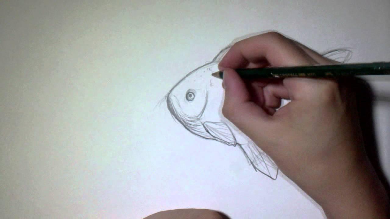Dessiner un poisson observation mat riel d butant youtube - Dessiner un poisson facilement ...