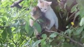 Кошачий секс - Thrash
