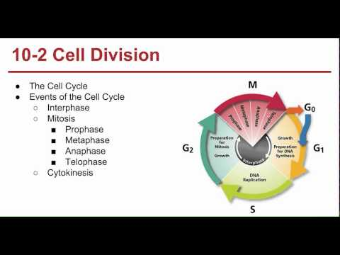 Ch. 10 Cell Growth and Division