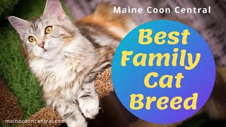 Why Maine Coons Are Best Cat Breed For Families