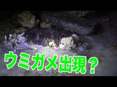 深夜3時の海で寝てる生物捕獲してたらまさかのウミガメ出現!?【無人島0円生活深夜〜朝ごはん】
