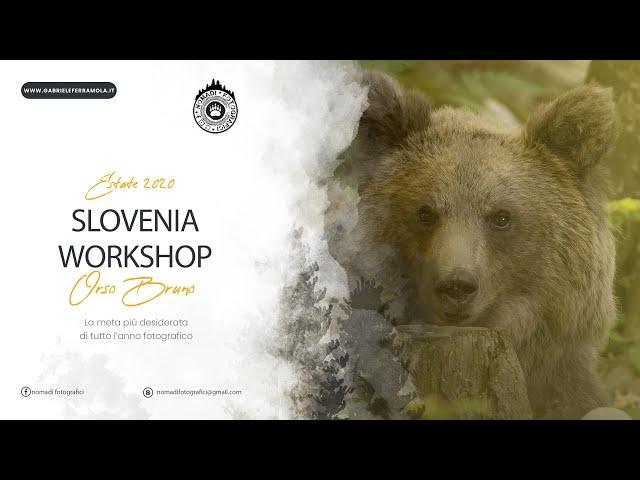 Slovenia 2020 - Orso bruno, grotte, e natura