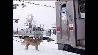 (非HD)動物集まる釧網本線