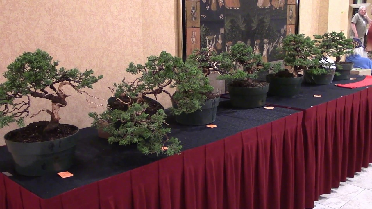 Day 3a Bsf Abs Orlando Joshua Roth New Talent Competition Bonsai Wiring Demo Submissions