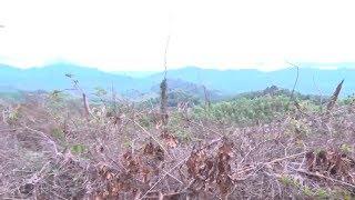 Tin Tức 24h  : Quảng Nam kiểm tra, xử lý nghiêm vụ phá rừng ở Tiên Lãnh