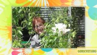 Весна пришла к нам в сад