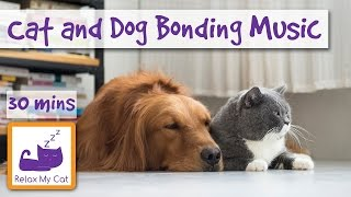 Music to Help Cats Bond with Dogs! Violin Music for Pets!