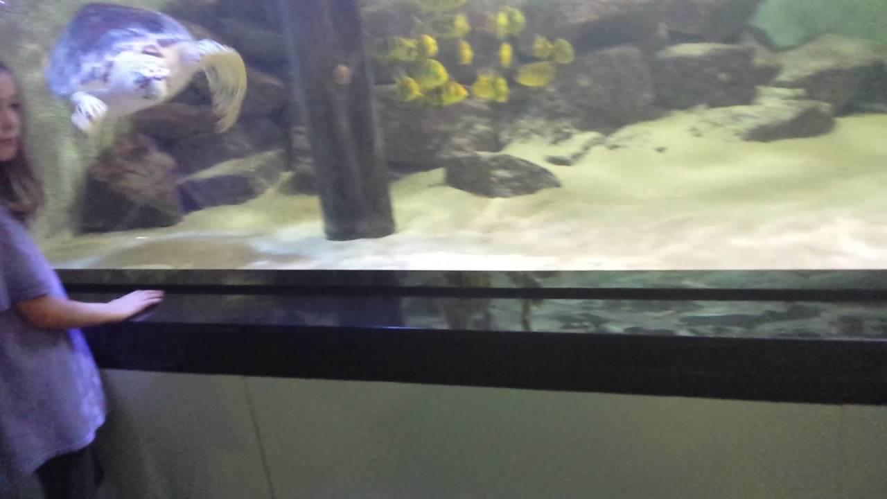 Freshwater aquarium fish dallas - Children S Aquarium Dallas 6 2 16 1
