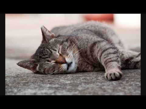 Senior Cats A Few Things To Keep In Mind | Cat Care