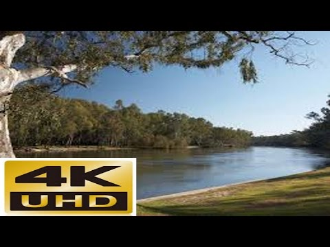 The Murray river in 4K, Relax on the banks on a sunny afternoon enjoying the sights and sounds.