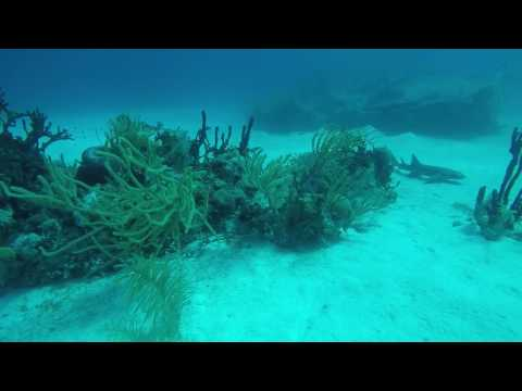 Scuba Diving - Grand Turk & Nassua Bahamas