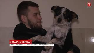 Собака на колесах, новини 2019-01-25