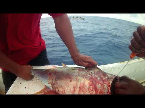Sashimi-Grade_Pohnpei