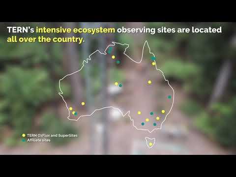 Eucalyptus Day 2018