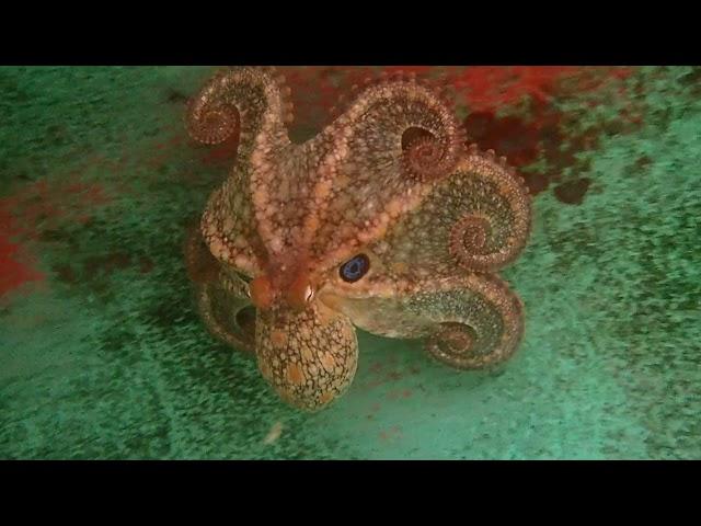 Octopus Garden 09/30/21