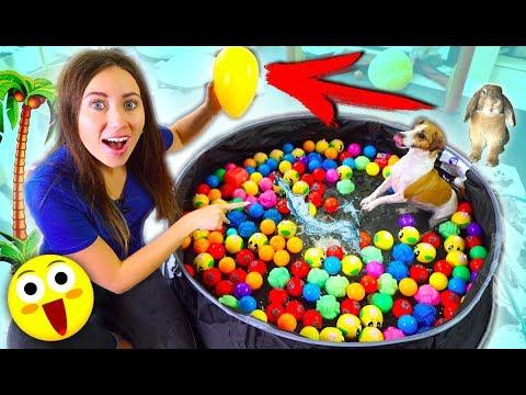 БАССЕЙН ДЛЯ СОБАК Аквапарк для собаки Джина и Яйцо Покупки из зоомагазина | Elli Di Pets