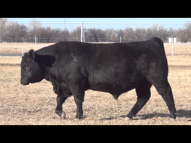 Express Ranches Lot 49