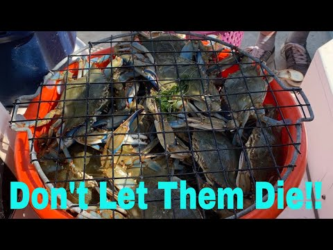 Blue Crab TLC - How To Keep Blue Crabs Alive For Days