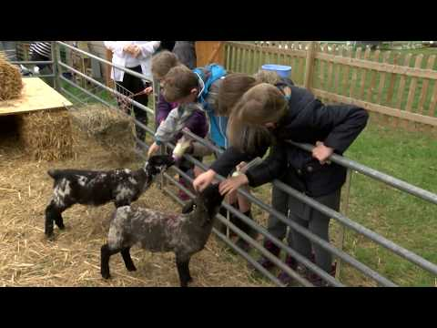 The Norfolk school running its own farm... with six orphan lambs