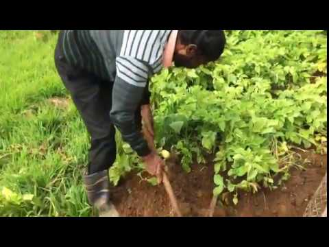 Fitness De Royale Organic County  Organic Food Harvest