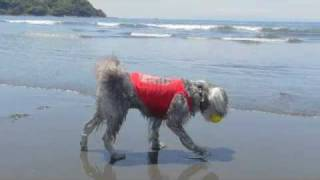 初夏の美しい空の日、海で遊ぶノワールを、フォトコンの賞品で頂いたコ...