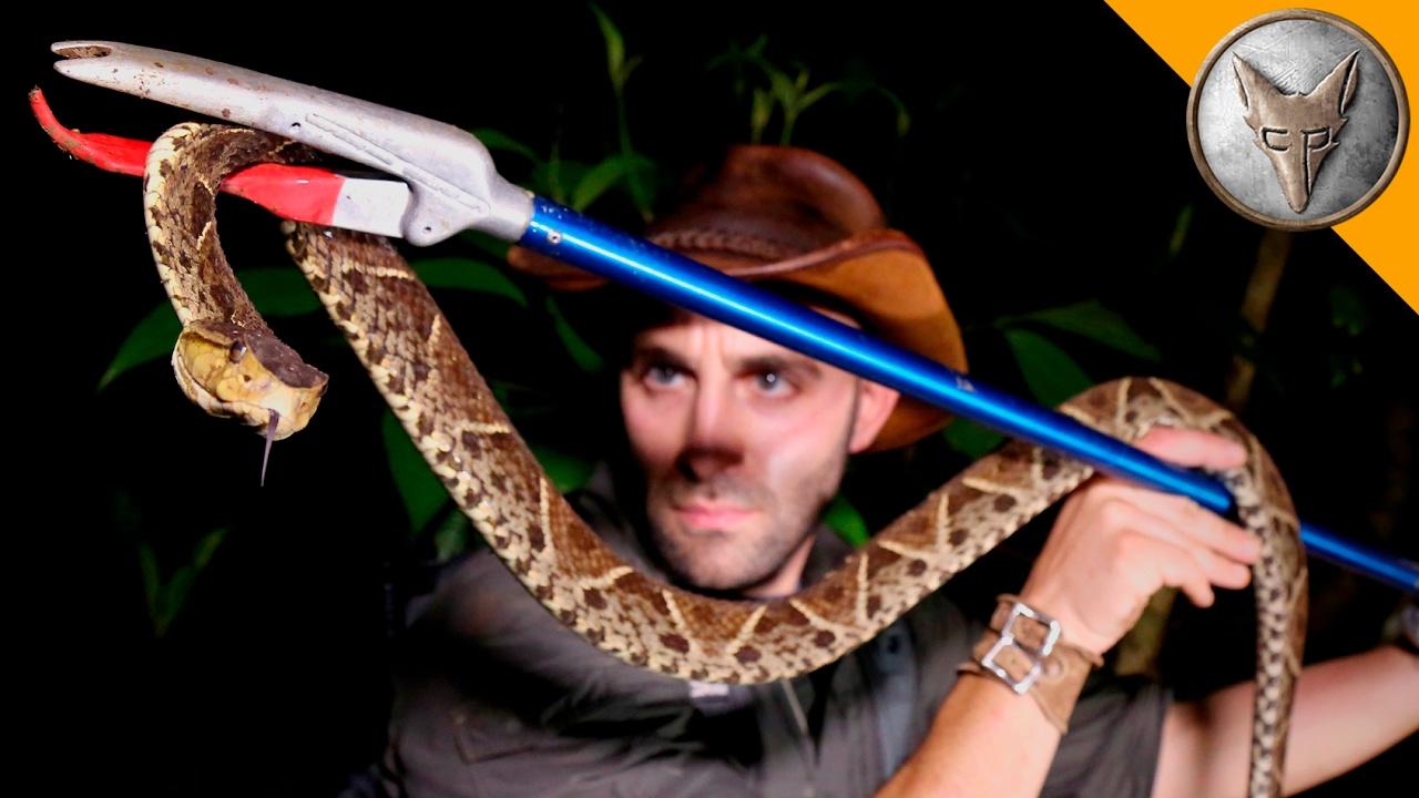 killer-snake-of-central-america