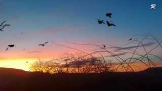 Защо не можем като птиците ...