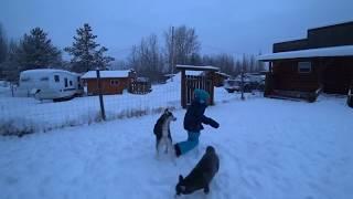 Larissas-Huskies 13-01-2020
