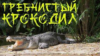 Гребнистый крокодил.  Крокодиловая ферма.  Малайзия Лангкави.
